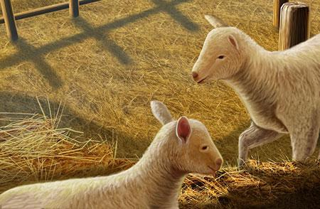 绵羊与山羊 中国文化VS古希腊文化